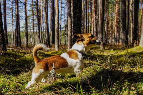 Dogs and Ticks: What To Know