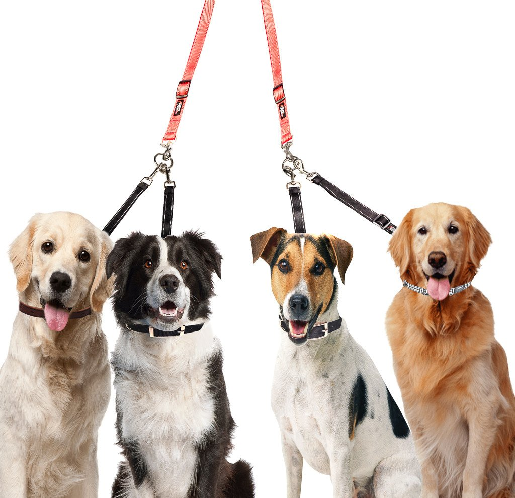How to Walk Multiple Dogs SAFELY