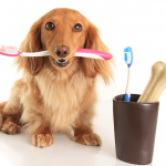 Keep Your Doggie's Teeth in Tip-Top Shape!