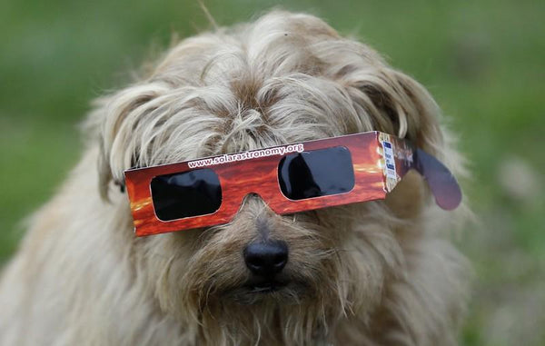 Protecting Your Dog's Eyes During the Eclipse