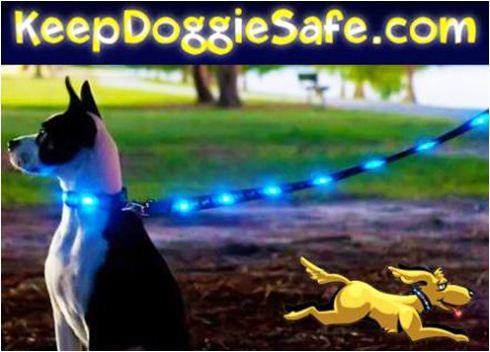 Tips for Buying a Lighted Dog Leash