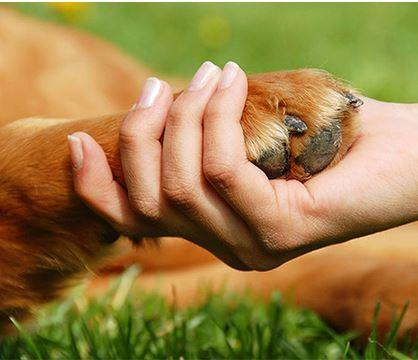 How to Bathe Your Dog's Paws