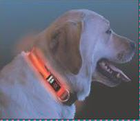 Niteize Lighted Dog Collar Review