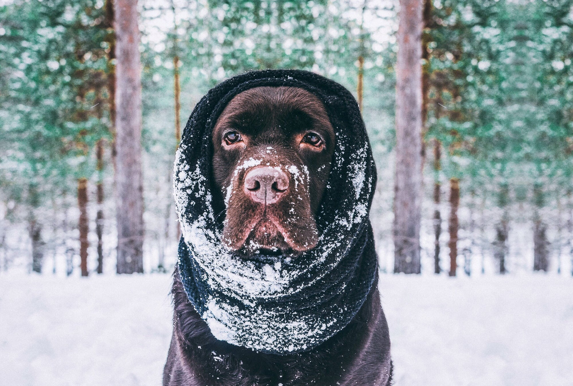 Cold Weather Dog Safety Tips