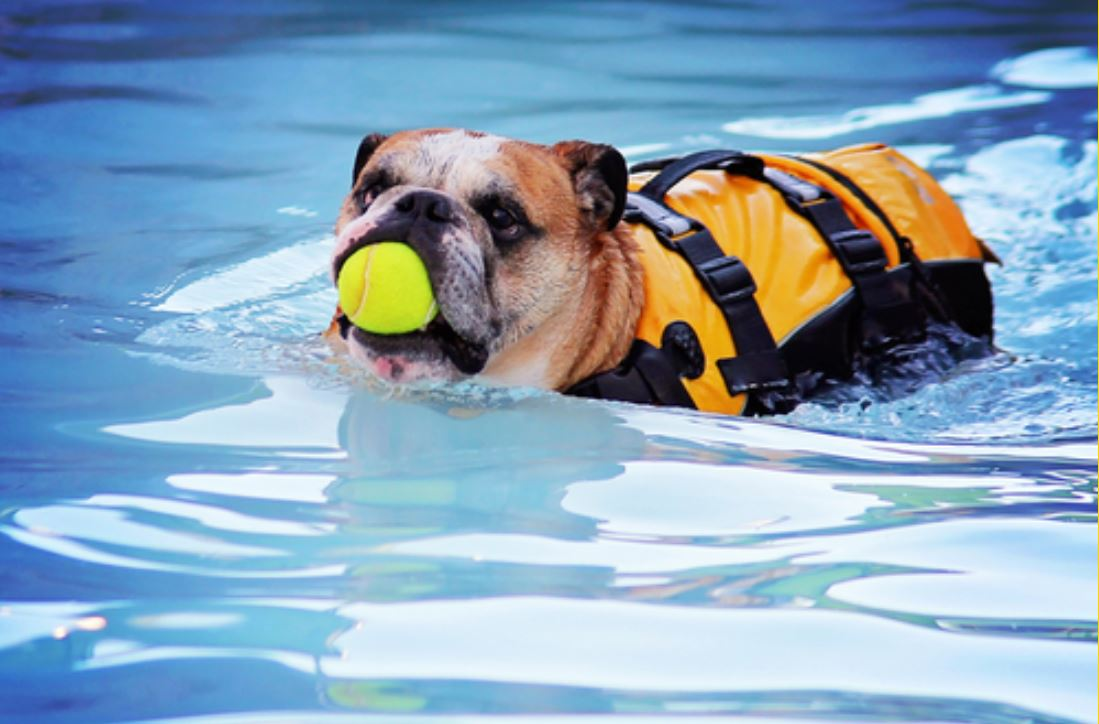 Dog Water Safety: Tips for Splashing Safely