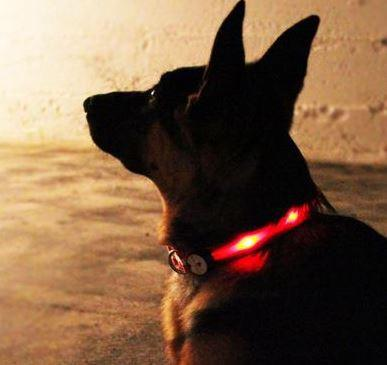 Nitebeam Collar and Leash Review