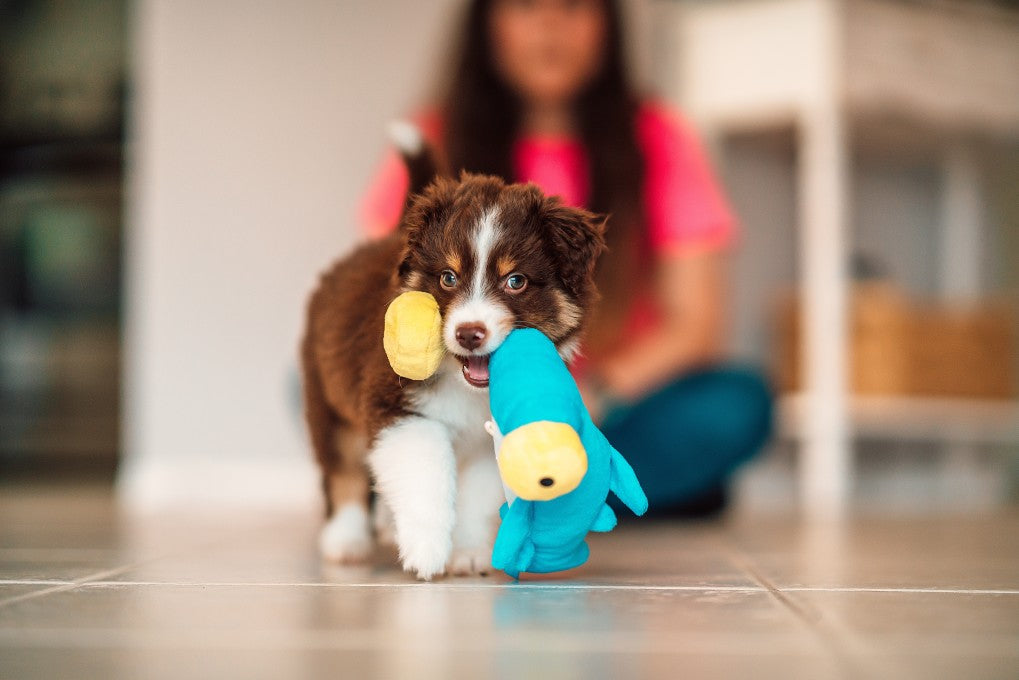 4 Ways to Make Your Dog's Toys Last