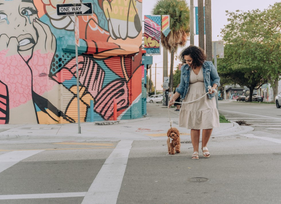 How To Walk Your Dog Safely and Politely In The City