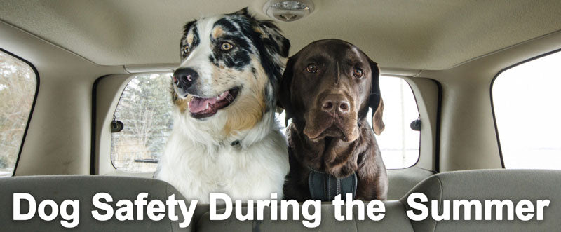 Dog Safety During the Summer