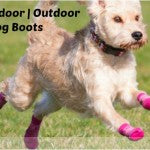 dog-boots-that-stay-on
