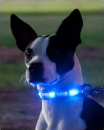 dog-eglow-dog-collar