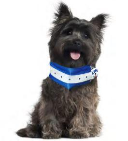 Doggie Cool Collar - Keep Doggie Safe