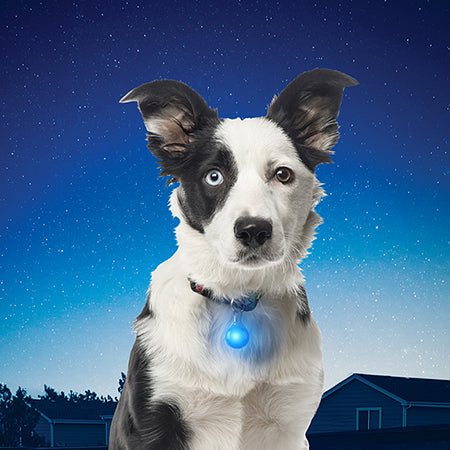 Adventure Lights Waterproof Dog Collar Light