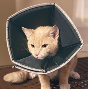 Comfy Cone for Cats