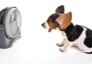 Deluxe Dog Cooling Fan | Automatically Turns On - Keep Doggie Safe