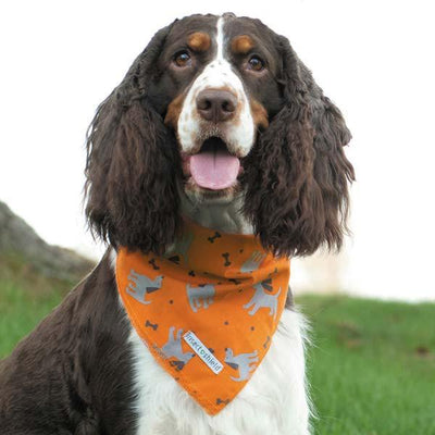 Insect Shield Dog Bandana With Anti-Insect Repellent