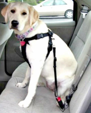 Dog Car Safety Belt - Keep Doggie Safe
