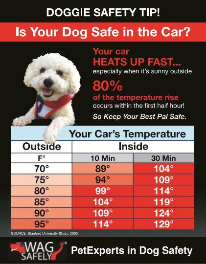 Dog in Hot Car Notes - Keep Doggie Safe