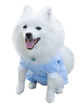 Tulane's Closet Post Surgery Dog Onesie