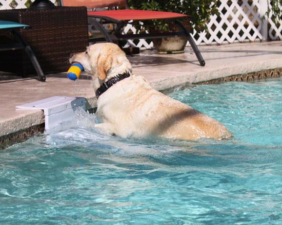 Pool Pup Ladder