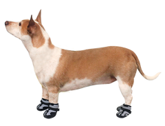 Alcott Explorer Adventure Dog Boots