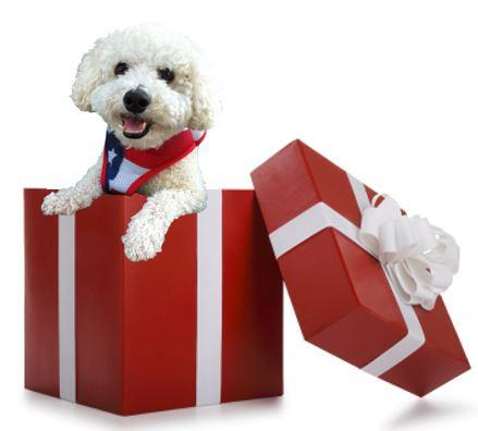 Gift Card - Keep Doggie Safe