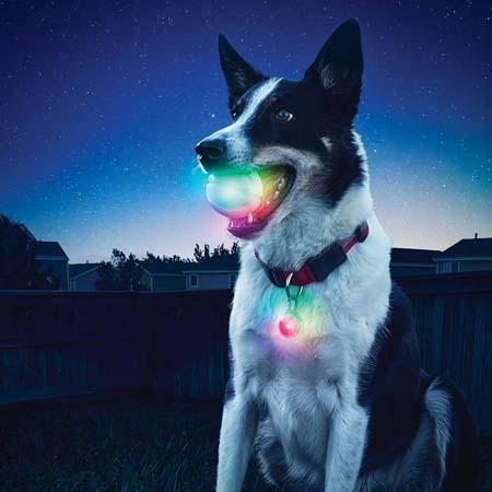 Lighted LED Dog Ball - GlowStreak - Keep Doggie Safe