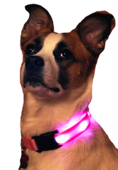 Nitebeam LED Dog Collar