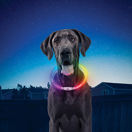 Nite Ize NiteHowl Rechargeable LED Dog Safety Necklace Disco Select