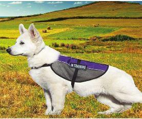 Mesh Service Dog Vest - Keep Doggie Safe