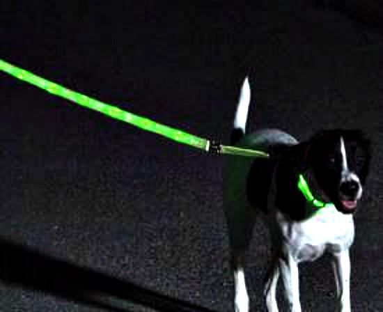 Nitebeam LED Lighted Dog Leash -Rechargeable