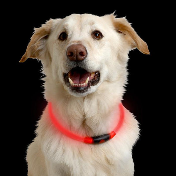 Nitehowl Dog LED Necklace - Keep Doggie Safe