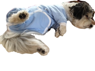 eda06e241af ... Tulane s Closet Post Surgery Onesie - Keep Doggie Safe ...