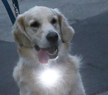 PupLight Dog Headlight - Keep Doggie Safe