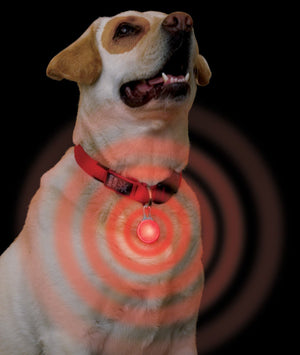 Spotlit Dog Collar Light - Keep Doggie Safe