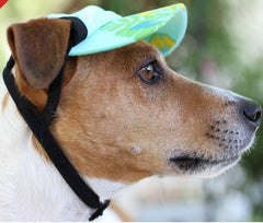 Dog Visor - UPF Protection - Keep Doggie Safe