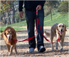 Two Dog Dual Adjustable Leash