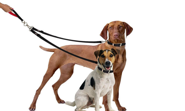 Two Dog Tangle-Free Dual Leash