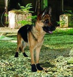 Ultra Paws Xtreme Kevlar Dog Boots