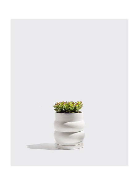 "8"" Double Planter in White"