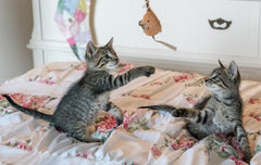 Four Fun Ways to Get Indoor Cats Moving