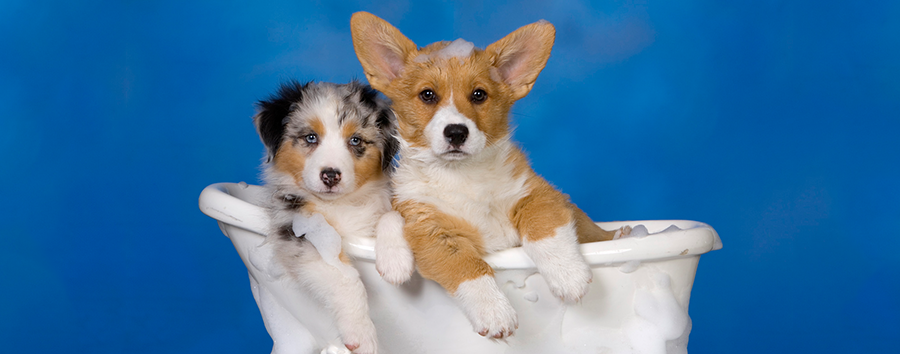 How Often Should I Bathe My Dog?