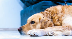 Common Causes of Pet Odor