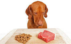 Why You Should Consider A Raw Food Diet for Your Pet