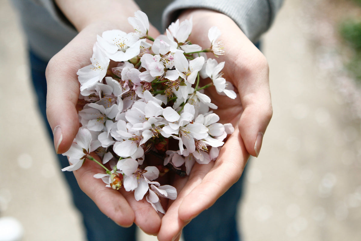 Giving Back in Grief: 6 Tips for Supporting Grief When in Grief