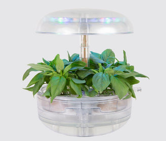 المزرعة الذكية Plantui Naked 6 Smart farm Plantui