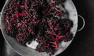 Is Elderberry the Secret Weapon Against Sniffles?