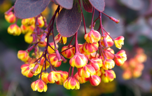 Sunergetic Products - Learn more about Berberine