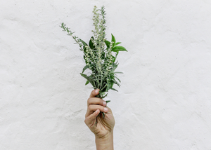 7 Herbs to Add to Your Stress Management Kit