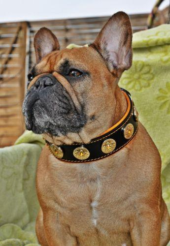 French Bulldog leather dog collar